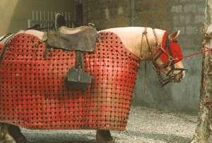 chevalcorrida.jpg